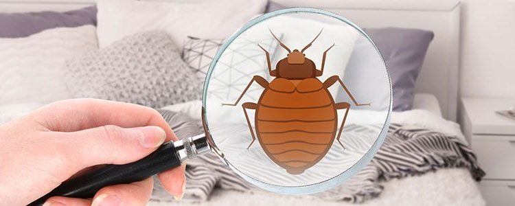 Reliable Bed Bug Exterminator