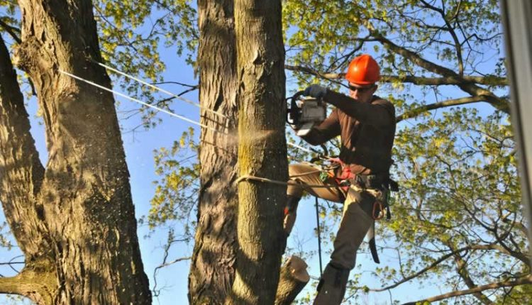 high-quality tree lopping in Perth