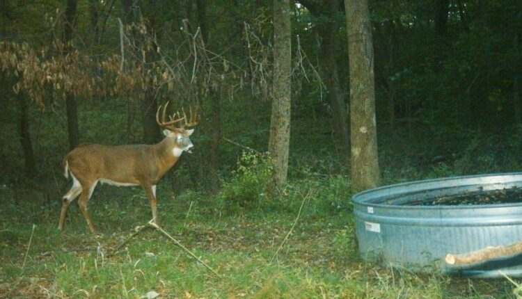 Attract Deer to your Land0